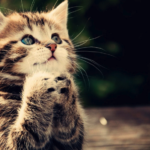 twitterで話題のカワイイ猫動画まとめ♪癒されること間違いなし!