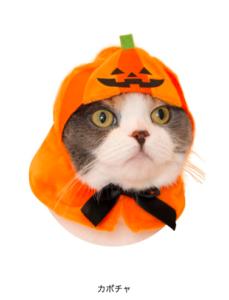 猫のかぶりもの,ハロウィン,かぼちゃ